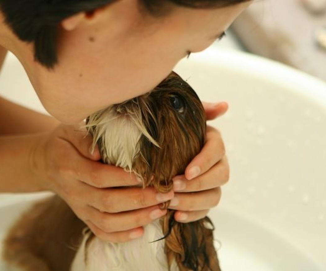 El amor de los animales contra la depresión