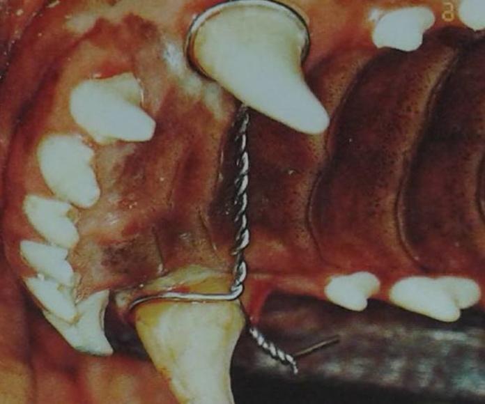 Odontología: Productos y servicios de Clínica Veterinaria Jameos