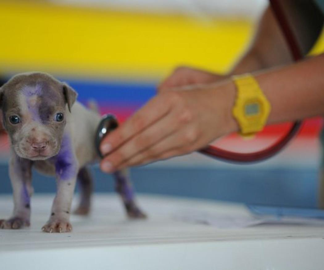 Síntomas por los que llevar a un perro al veterinario