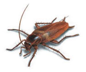 CONTROL DE PLAGAS ALICANTE: desinsectación y control de insectos
