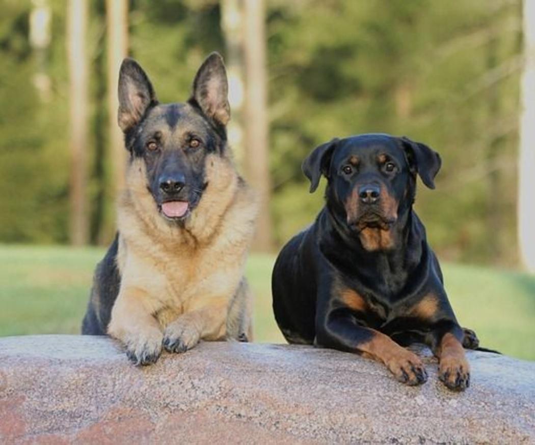 ¿Cuáles son los accidentes más comunes que sufren los perros?
