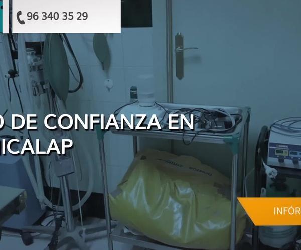Veterinarios en Valencia | Clínica Benicalap