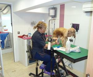 Clínica veterinaria en El Palmar | Cliper's Clínica Veterinaria