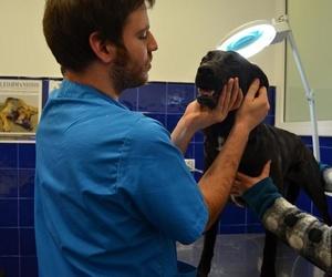 Urgencias veterinarias 24 horas en Reus