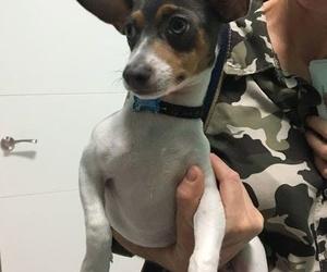 Servicio veterinario en Pilas
