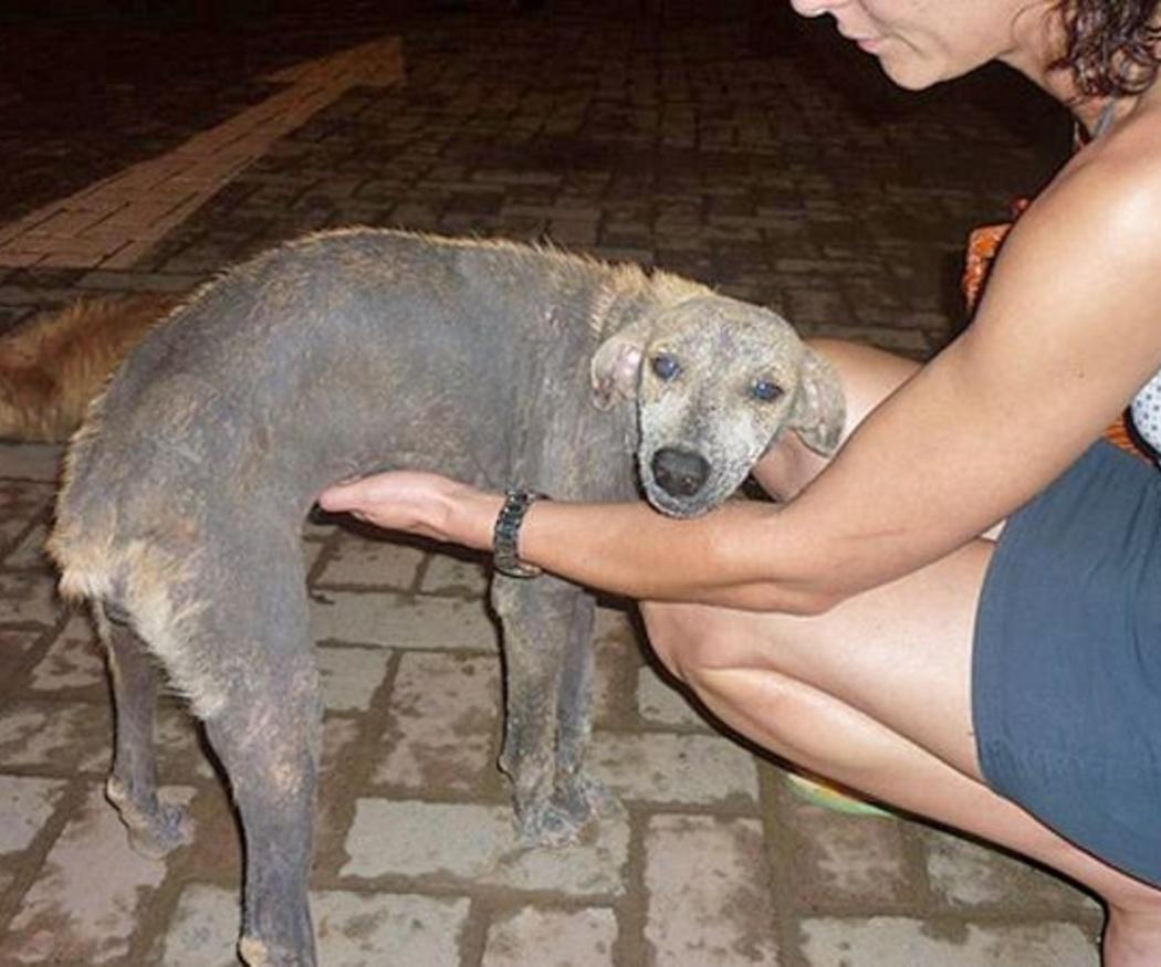 Reconocer los síntomas de la leishmaniosis en nuestro perro