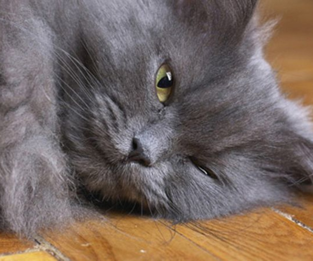 La desparasitación de perros y gatos