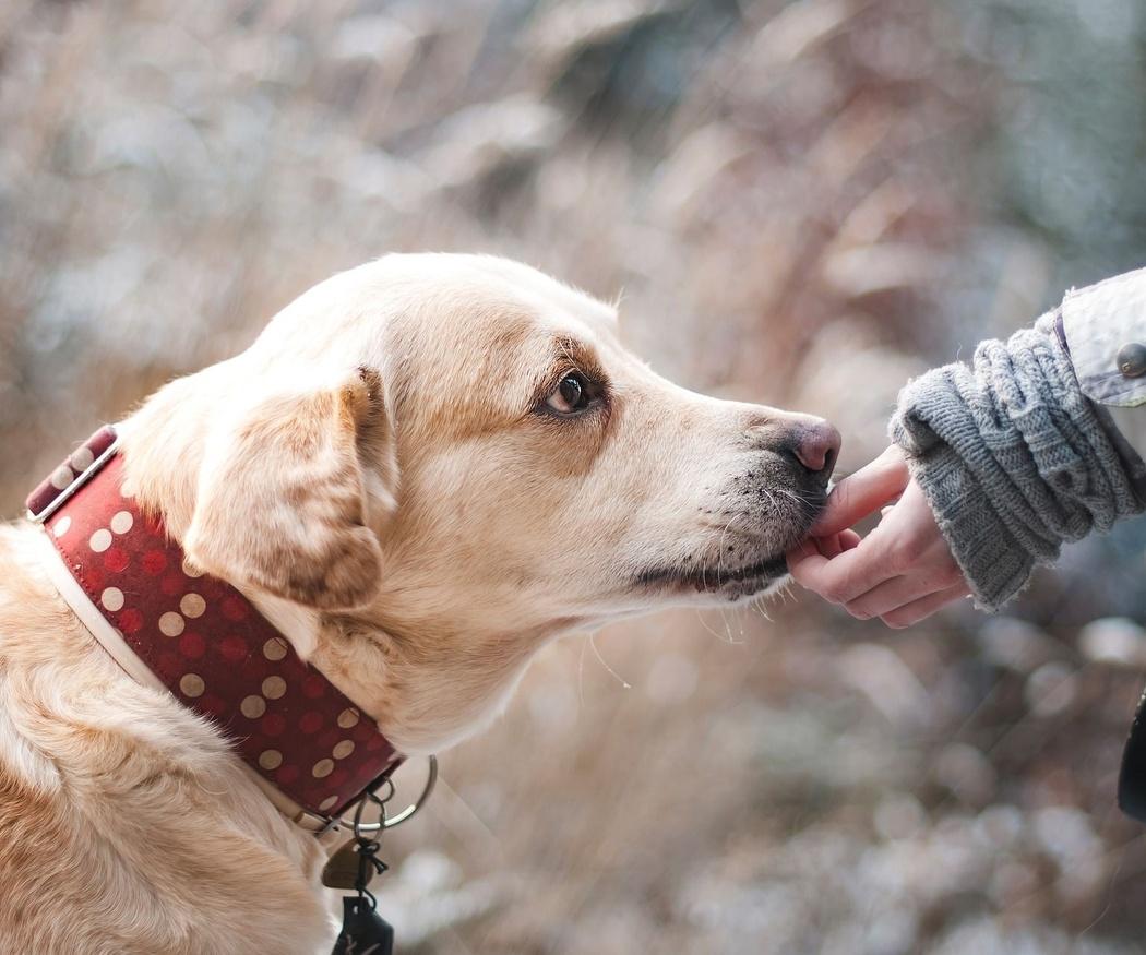 Por qué regalar un perro a una persona mayor es una buena idea
