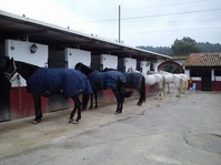 En Club Hípic Can Buimira ofrecemos pupilajes en box o paddock!