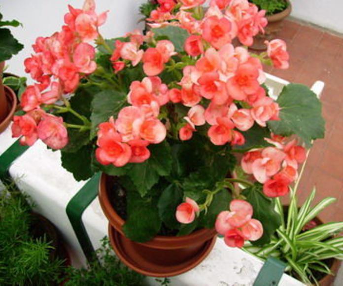 Plantas : Catálogo de Arte y Jardín
