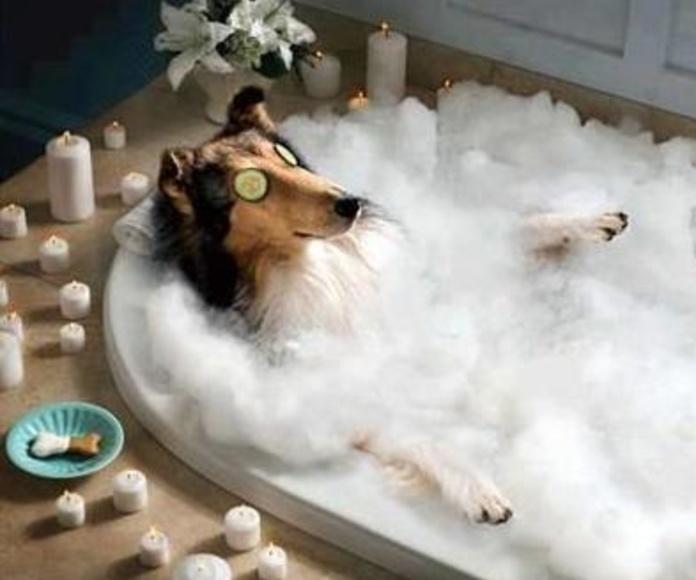 El baño en mascotas, Veterinario Madrid Hortaleza Canillas