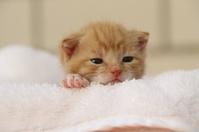 Gatos: Animales y Accesorios de Mila-Bierzoo