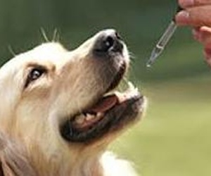 Naturopatia y homeopatía