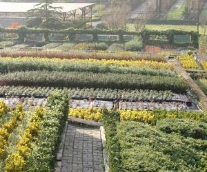 Producción propia de arbustos y coníferas