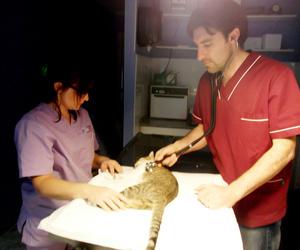 Urgencias veterinarias en Vilamarxant