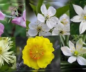 Los beneficios de las Flores de Bach