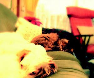 Clínica veterinaria en Sestao