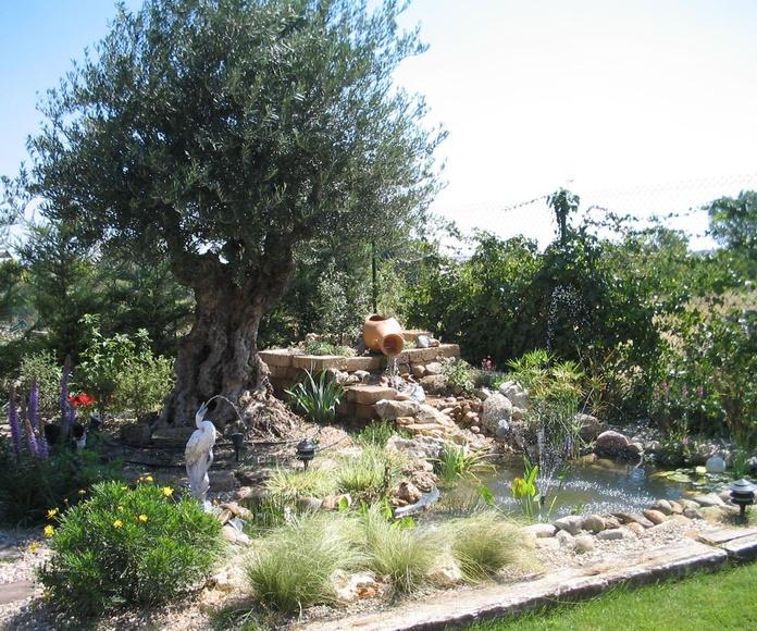 CREACIÓN DEL JARDÍN: Servicios  de Jardineria El Campillo