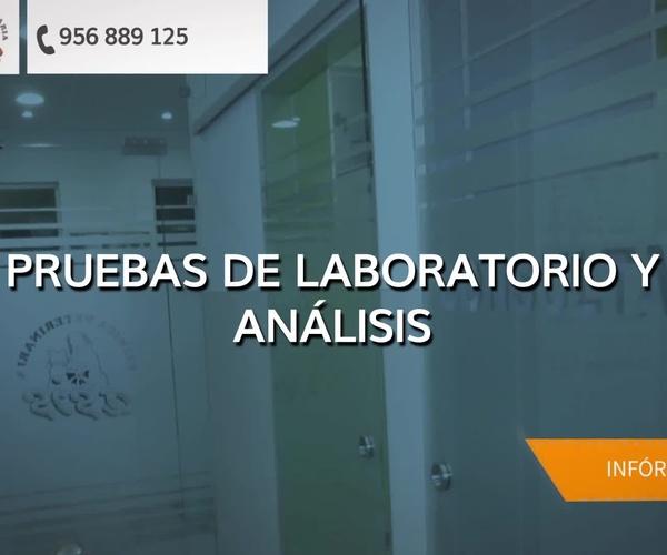 Veterinarios en San Fernando | Clinica Veterinaria Asis