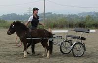 Todo tipo de actividades con ponys y caballos!!