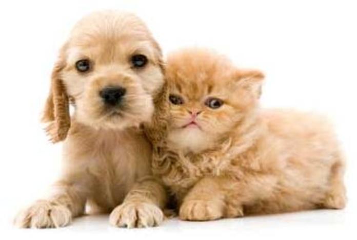 Cuidados veterinarios para mascotas en Madrid, Hortaleza - Canillas default:seo.title }}