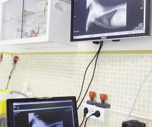 Urgencias veterinarias en Avilés | Centro Veterinario La Villa