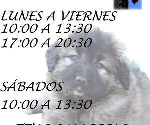 Peluquerías caninas en Chamberí | La Pelu de Ricki