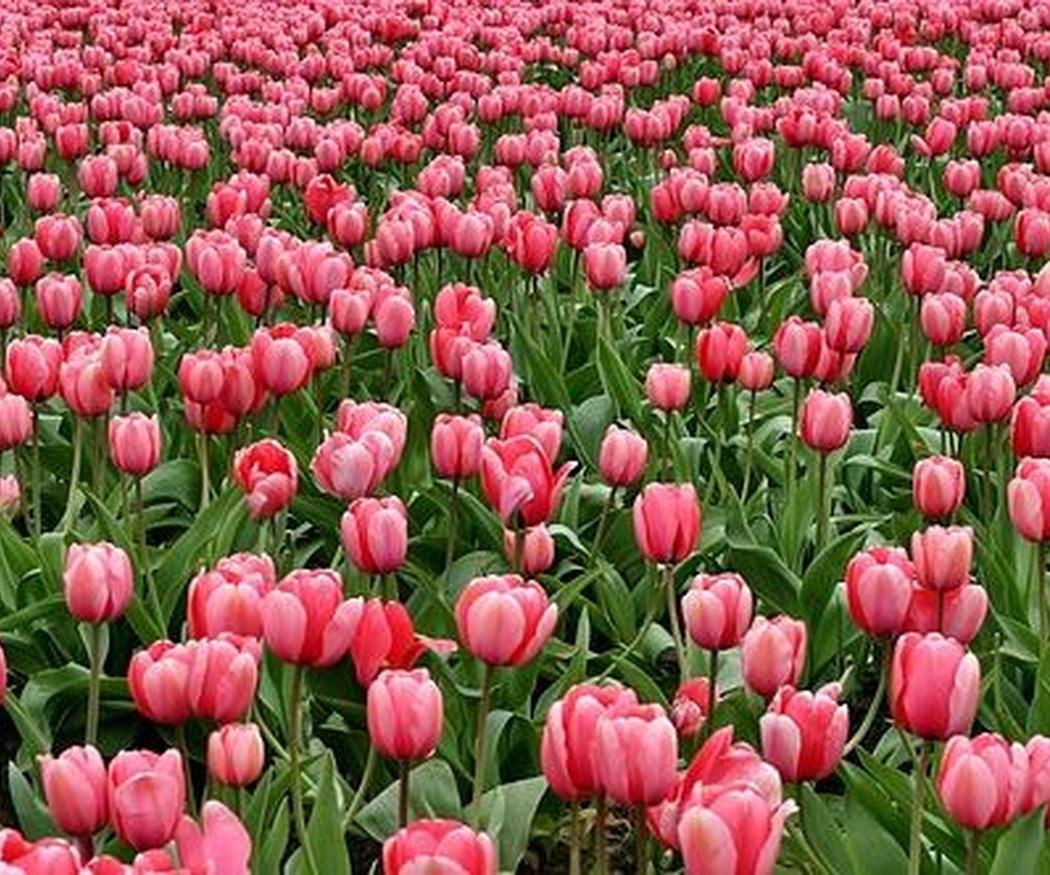 Jardines listos para recibir a la primavera (I)