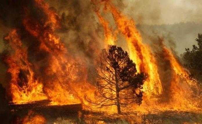Incendios forestales default:seo.title }}