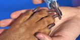 Peluquería canina en Catarroja