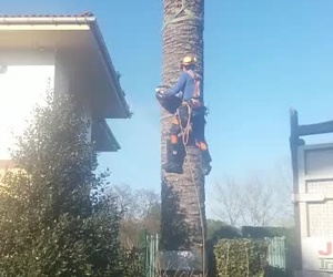 Mantenimiento de jardines en Gijón | Grupo Discreal