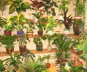 FLORES Y PLANTAS NATURALES EN LEÓN