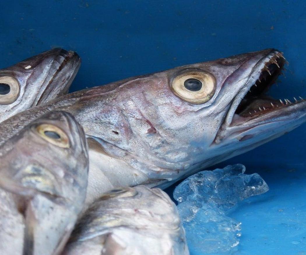 ¿Sabes distinguir el pescado fresco?