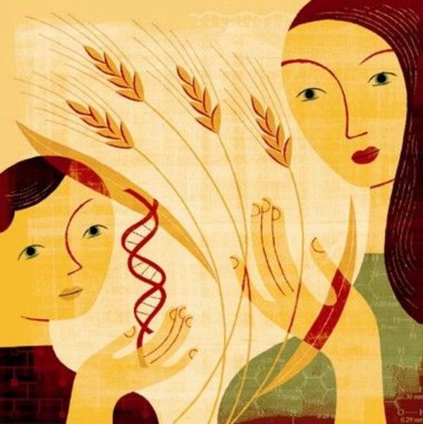Enfermedad celiaca: Una intolerancia al gluten de base genética