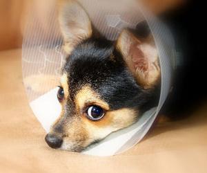 Urgencias veterinarias