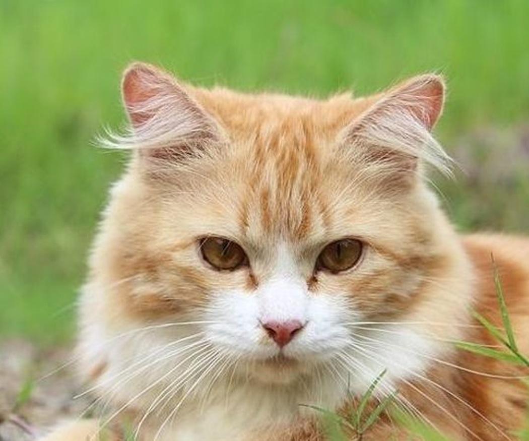 ¿Debo esterilizar a mi gata?