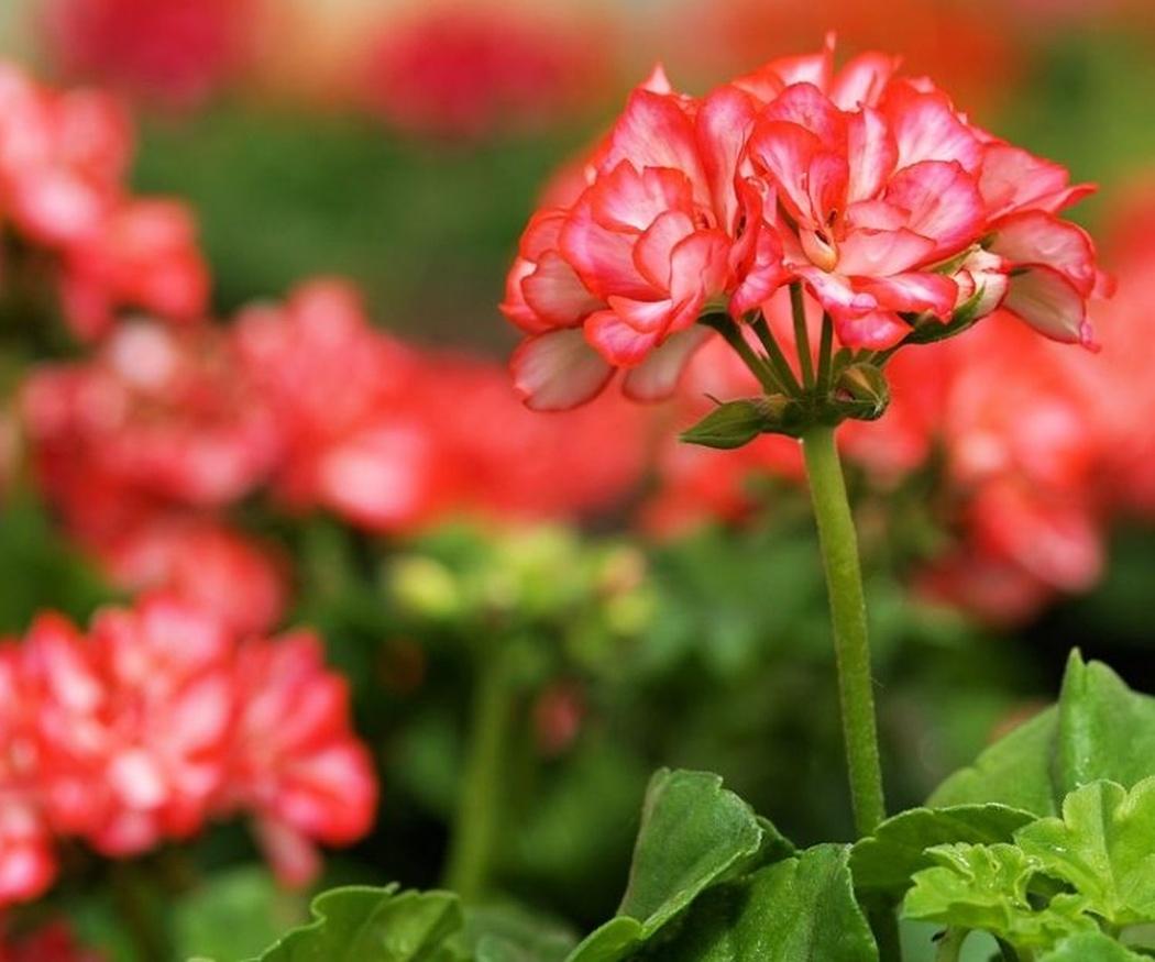 ¿Cuáles son las plantas que mejor soportan el calor?