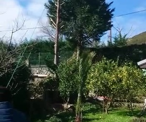 Galería de Diseño y mantenimiento de jardines en Muskiz | Jardinería IGLE-MAN