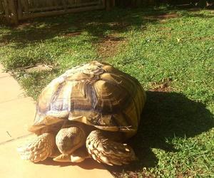 Veterinario de animales exóticos: tortugas