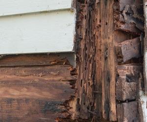 Control de termitas en Alicante