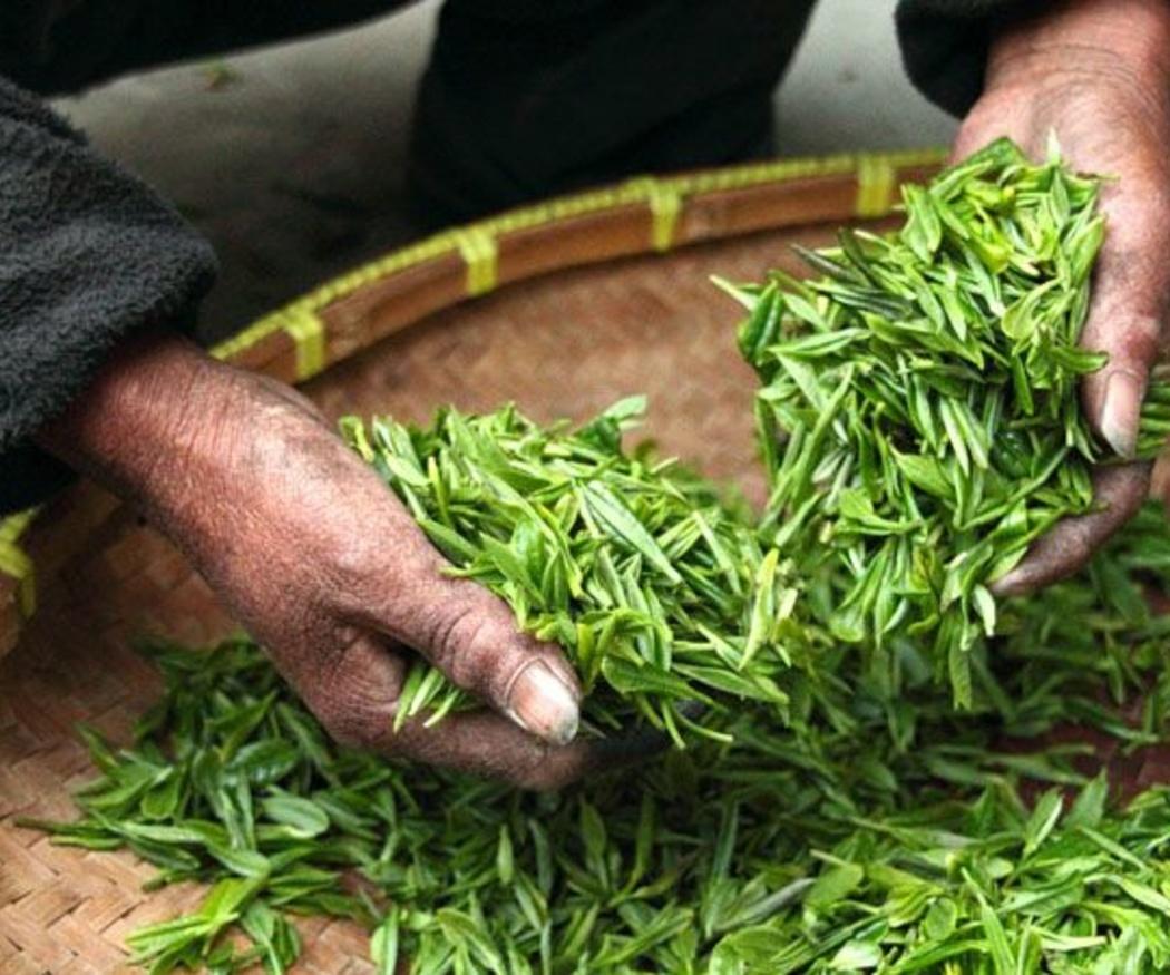 El origen del té