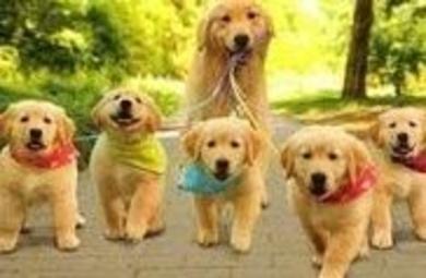 Inseminación artificial en la perra