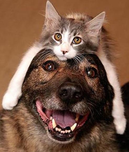 Mascotas mayores, la mejor atención veterinaria en  Hortaleza - Canillas|default:seo.title }}
