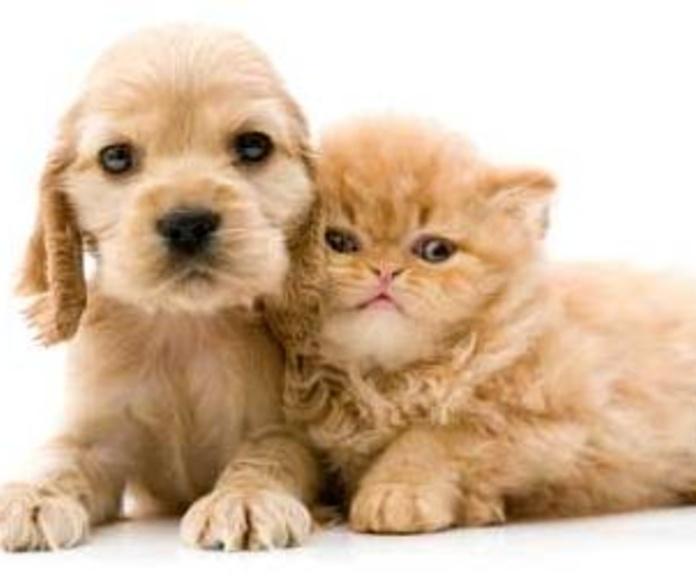 Cuidados veterinarios para mascotas en Madrid, Hortaleza - Canillas