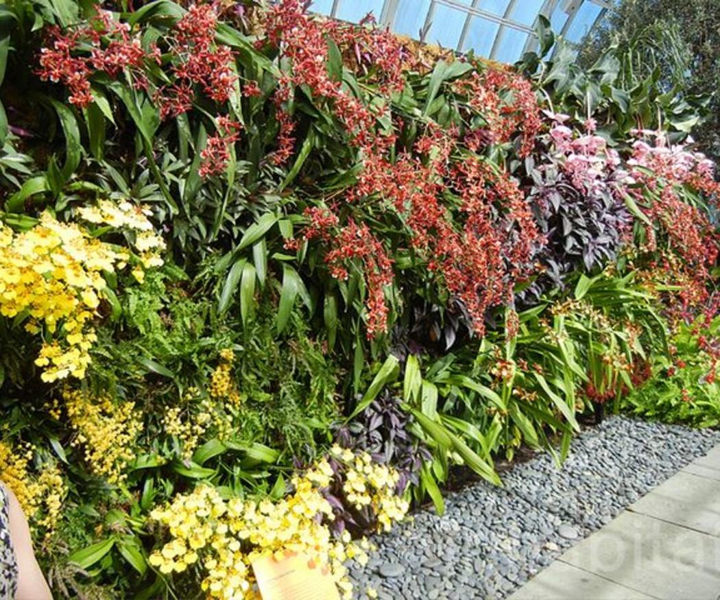 ¿Cuáles son las ventajas de los jardines verticales?