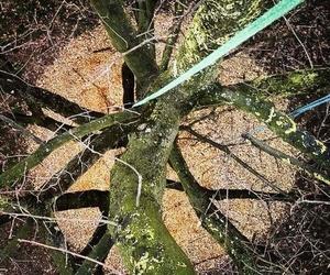 Gestion Arborea