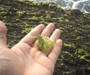 Algunos beneficios de las algas