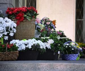 Floristería en Campo de Criptana