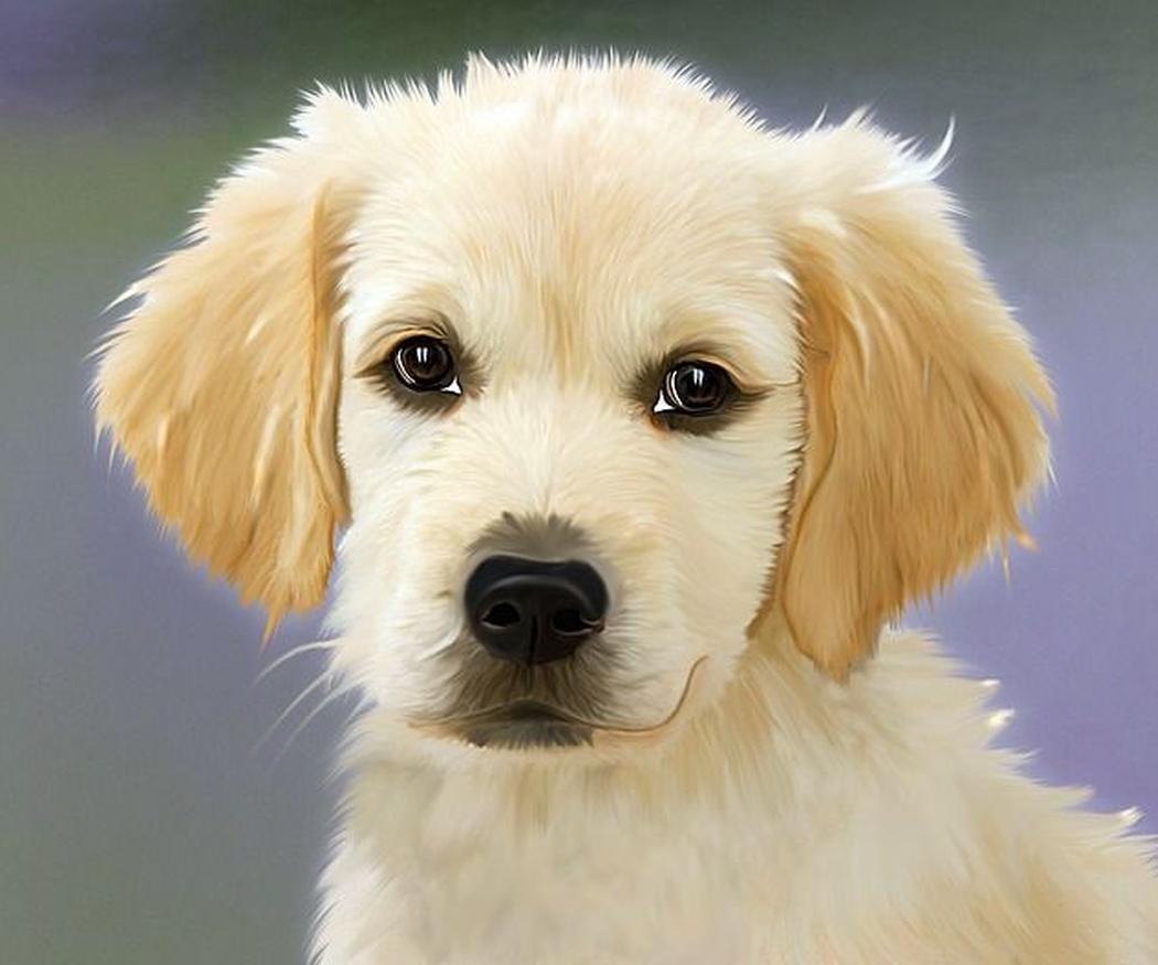 Las 5 enfermedades más comunes de los perros y cómo detectarlas