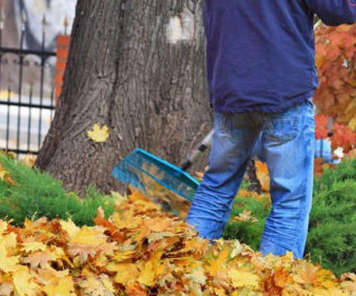 Mantenimiento de jardines en la Rioja